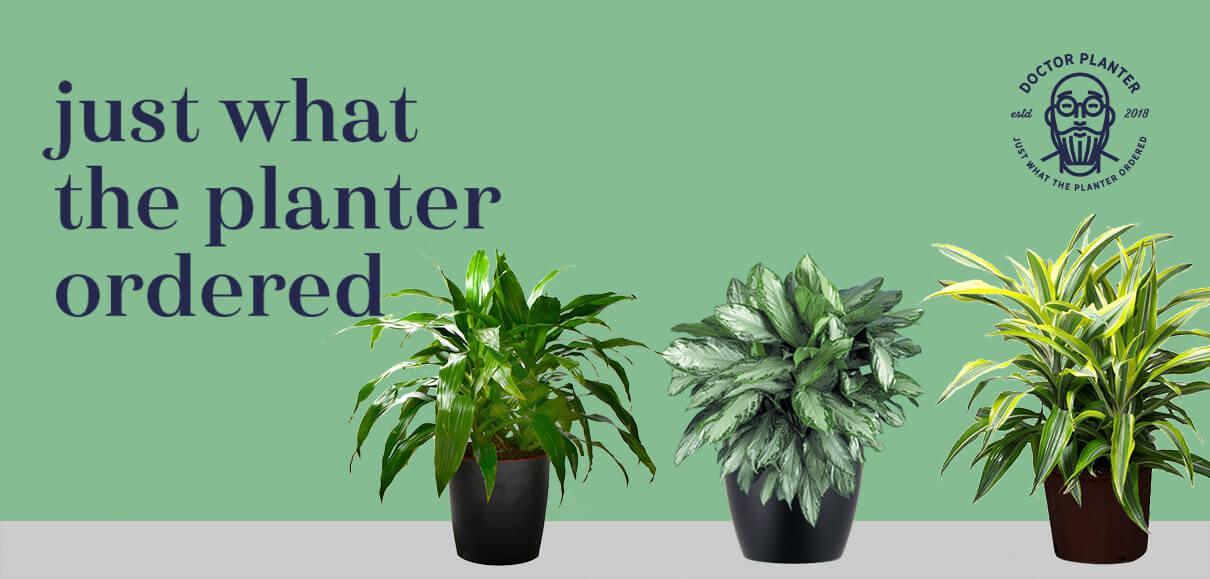 Doctor Planter